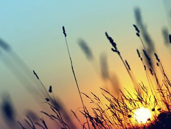Image of sun setting behind grass